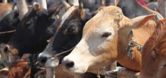 CM Sarma tabled cattle preservation bill in Assam assembly